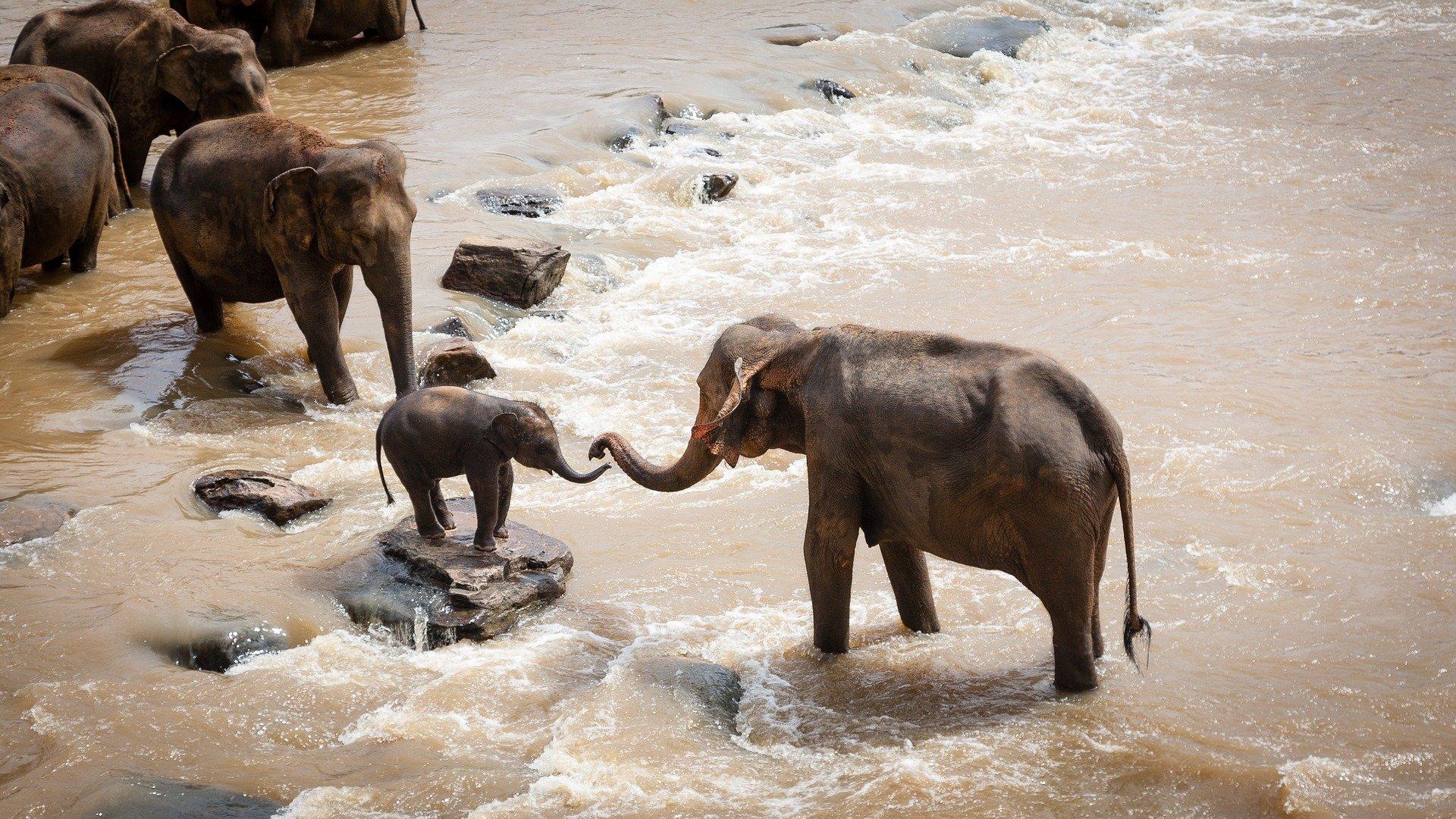 elephants-1900332_1920