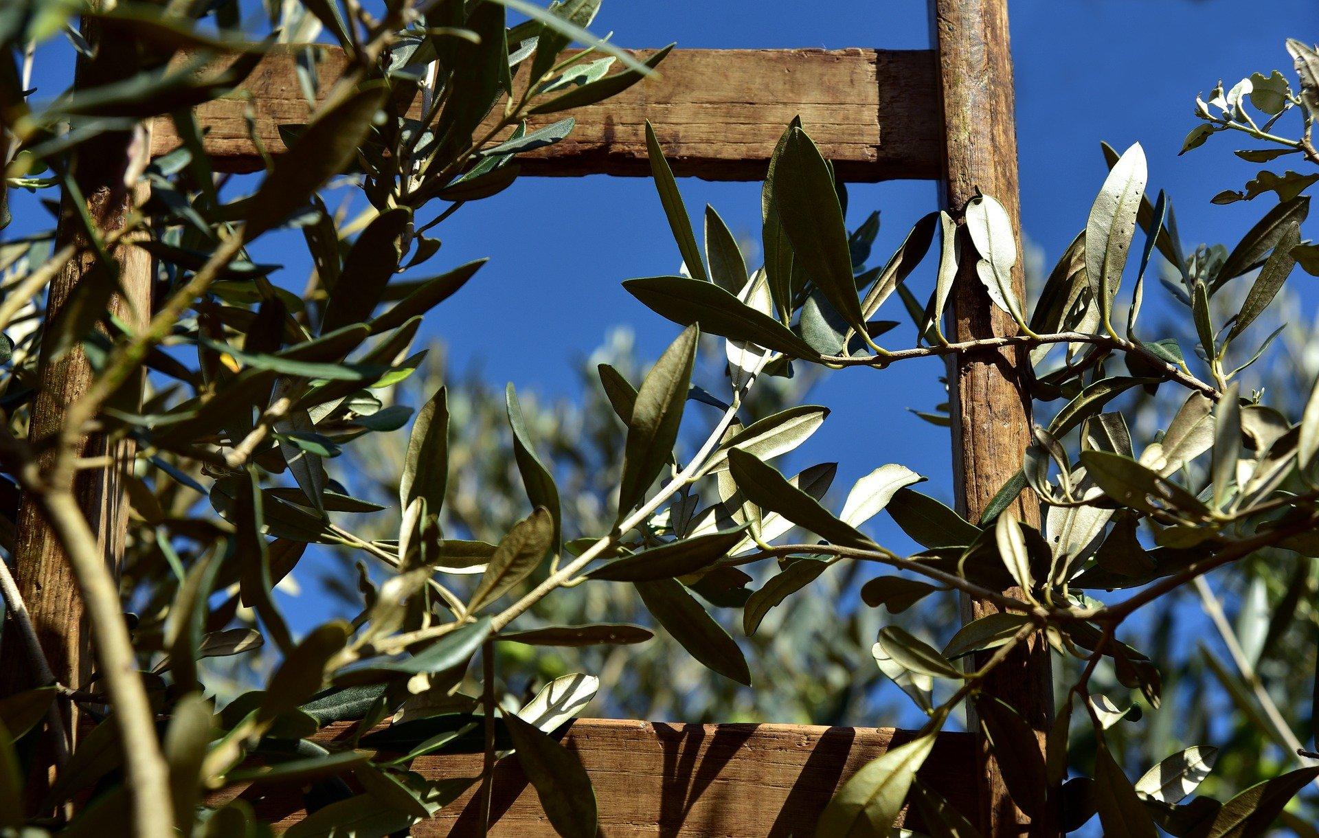 wooden-ladder-3803017_1920